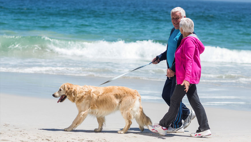 older couple walking dog along the beach